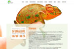 tipitalia-screenshoot-website-03